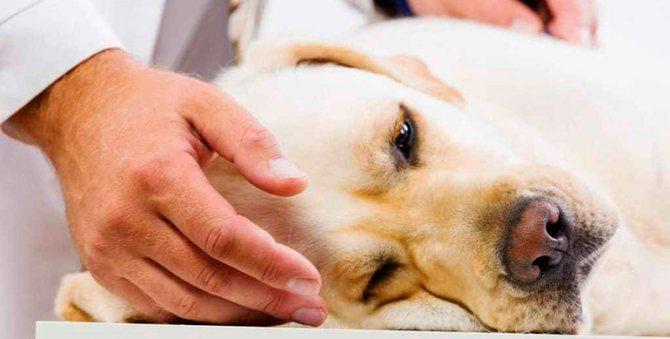 Нейротоксическая реакция у собак