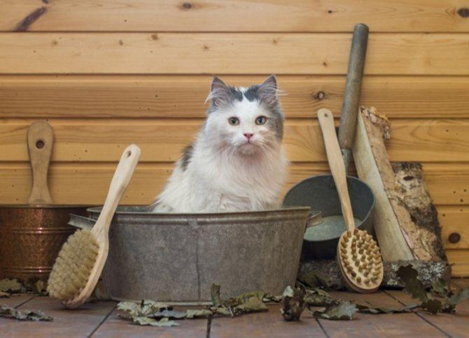 Нельзя купать кошку