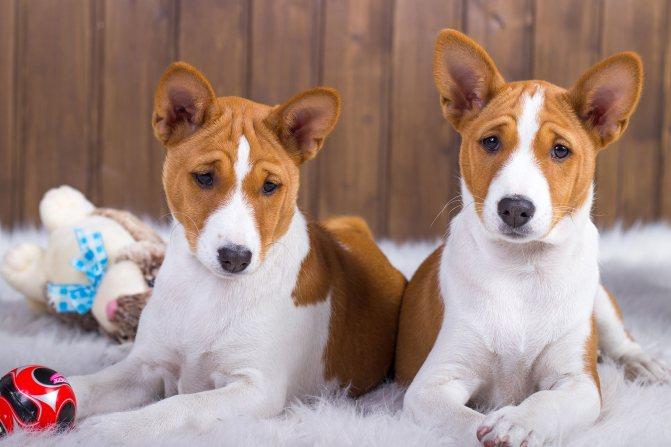 Необходимо тщательно следить за здоровьем собаки