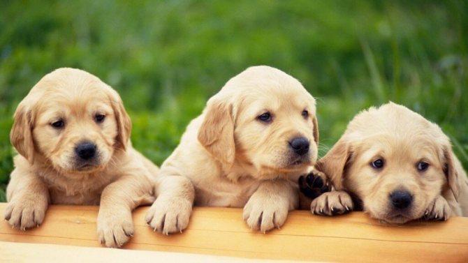 Необычные имена для собак девочек