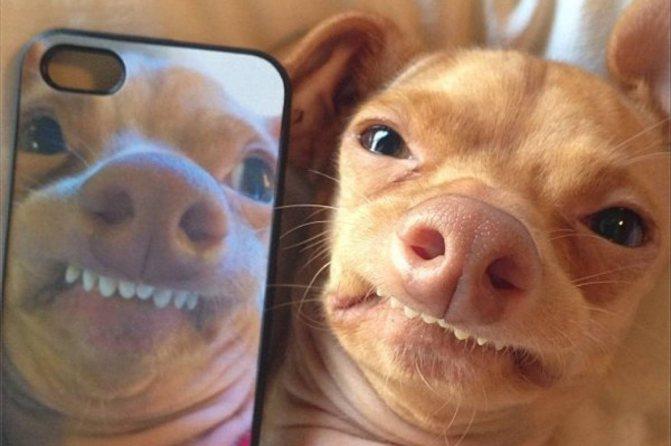 Неправильный прикус у собак: что делать, как исправить и возможные последствия