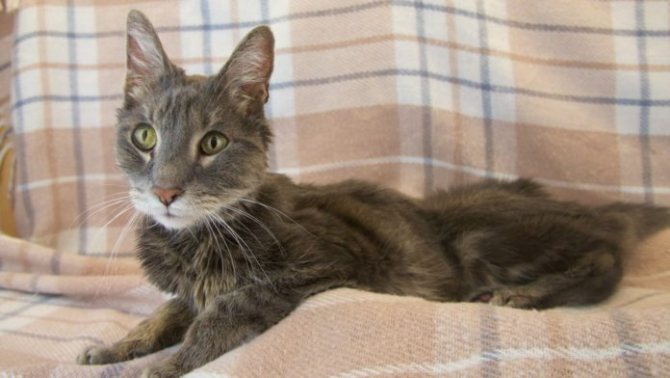 Непредсказуемый инфаркт у кошек: признаки, диагностика и восстановление животного