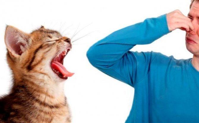 Неприятный запах у кошек изо рта