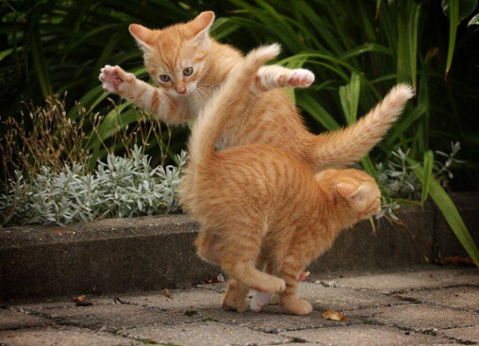 Несколько интересных фактов о котах и кошках