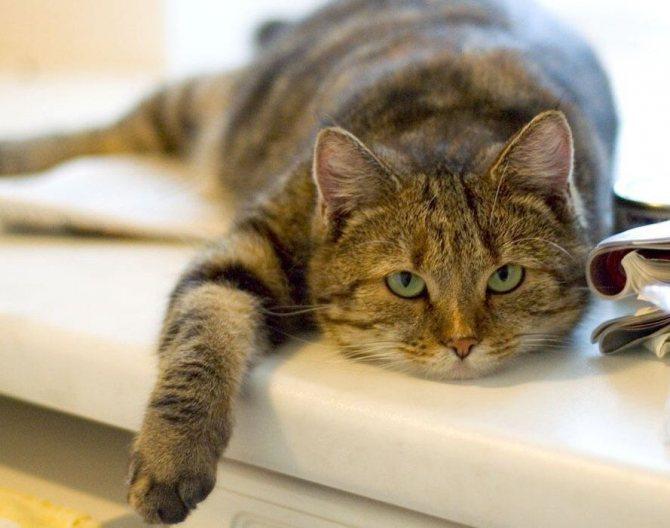 Несмотря на большое количество имеющихся таблиц, эксперты по кошачьему взрослению не приходят к единому мнению
