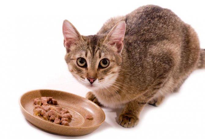 Несварение желудка у кота