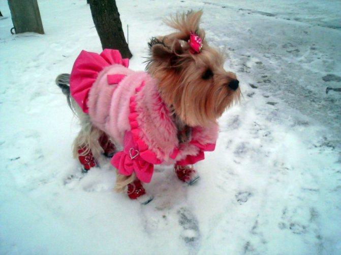 Норма потребления жидкости зимой для собак