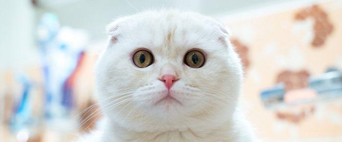 Нормальный стул у кота – какими должны быть консистенция и цвет кала? Кал кошки Почему у кота кал