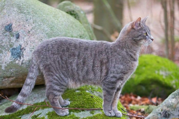 Нормальный вес кота