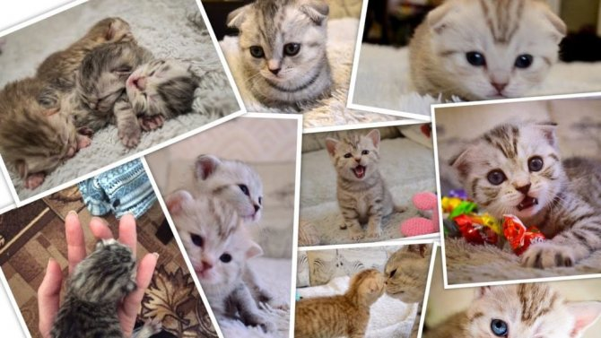 Новорожденные котята растут очень быстро