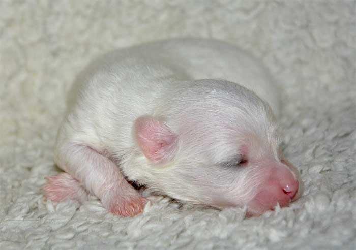 Новорожденный щенок, фото фотография собаки