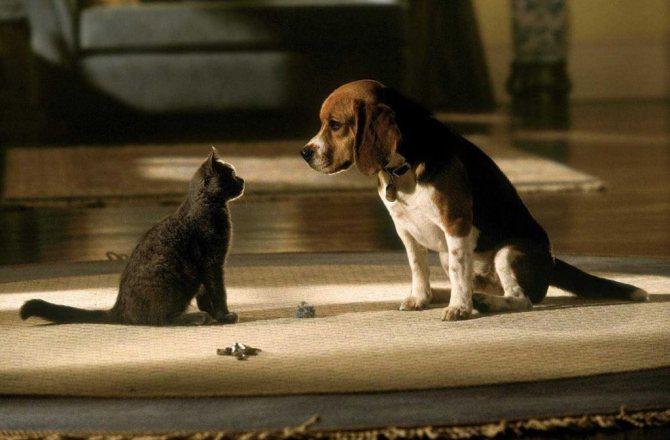 Новые домашние животные могут вызывать у кошки желание скрыться