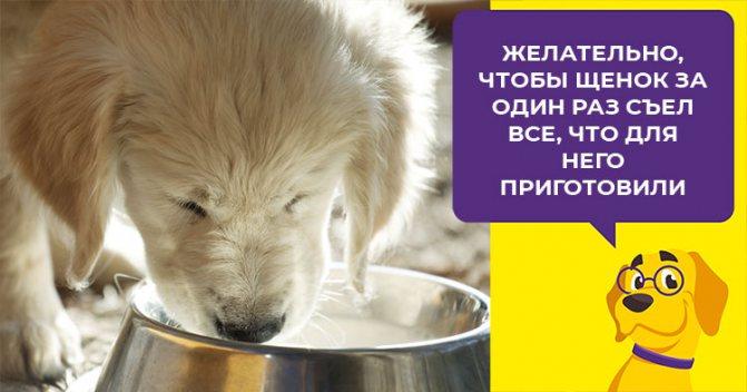 Нужно ли размачивать сухой корм для щенков и как правильно это сделать