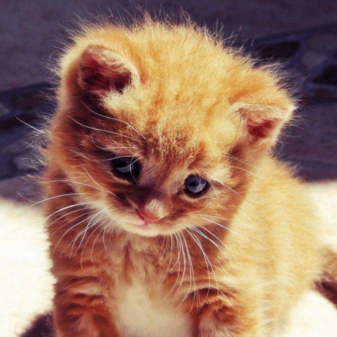 Няшные картинки котиков. Котики на аву.