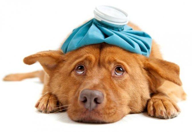 обезболивающие препараты для собак