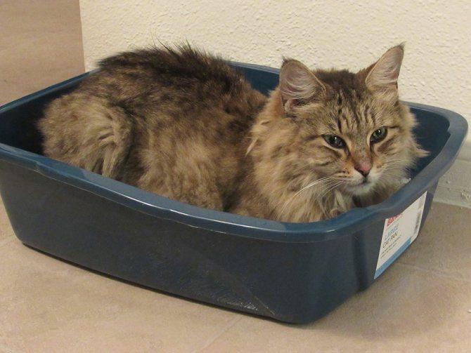 Облегчение коту доступа к лотку повысит вероятность того, что он не промахнется