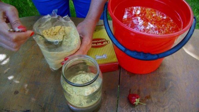 обработка горчичным порошком