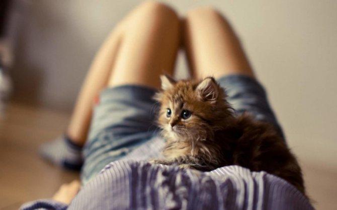 Общее значение сна про котят