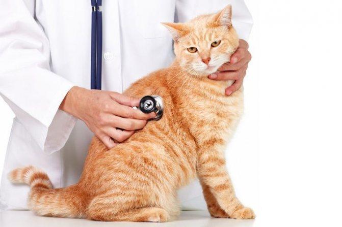 Обследование кота