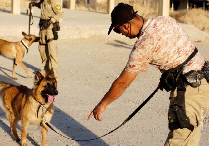 'Обучение собаки команде