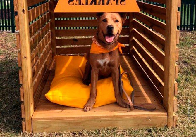 Обустройства места для собаки
