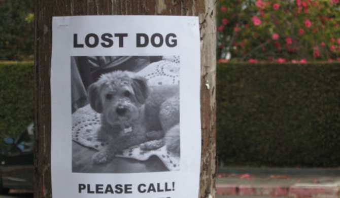 Объявление о пропаже собаки