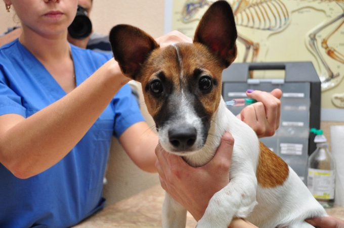 обязательная вакцинация собаки от бешенства