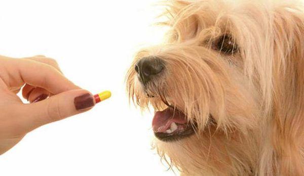Обязательно ли выводить глисты перед вакцинацией?