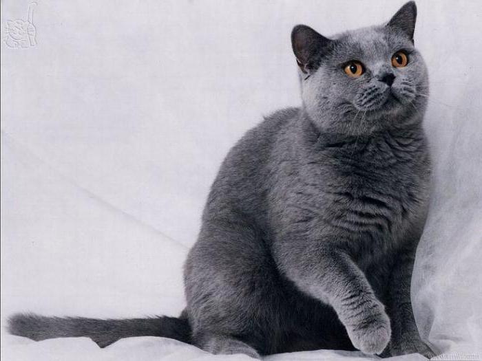 обычные кошки дворовые