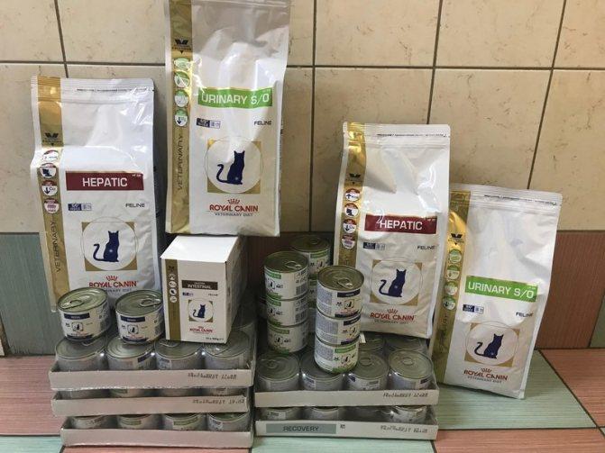 Обзор кормов для кошек с чувствительным пищеварением и заболеваниями ЖКТ