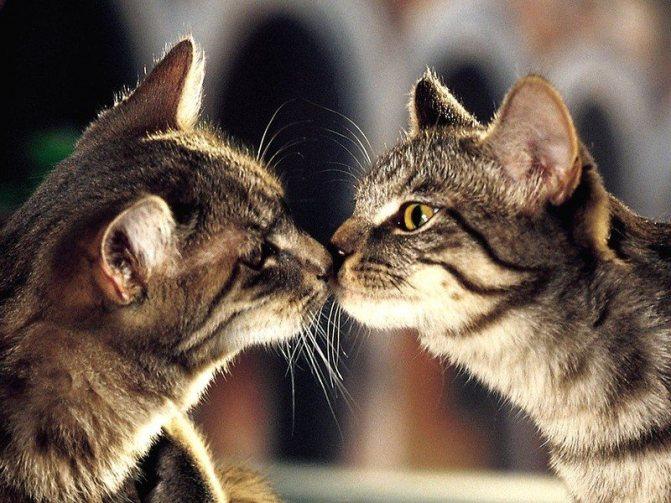 Очень важно дать животным самим пойти на сближающий первый контакт