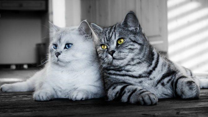 Очень важно обеспечить комфортные условия проживания обеих кошек
