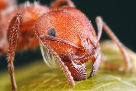 Опасные насекомые обитают в тропических странах