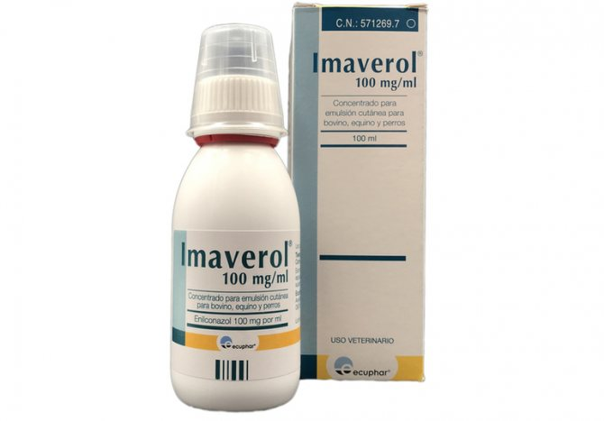 Описание препарата Имаверол для кошек