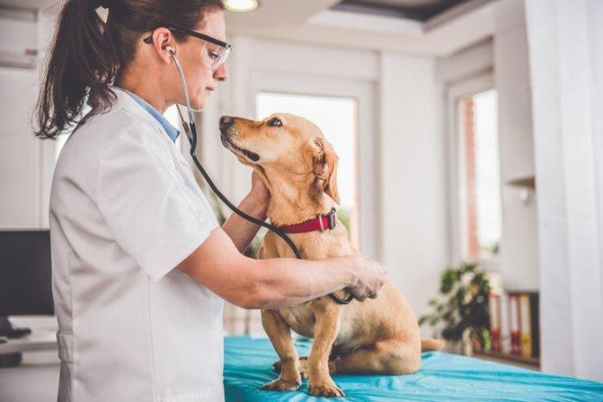 Опыт применения препарата Серения у собак при заболеваниях, сопровождающихся симптомокомплексом рвоты