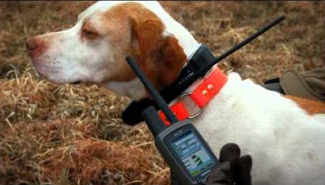 Ошейник для охотничьих собак, с GPS