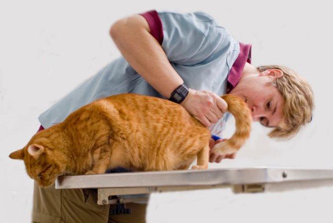 Осмотр ветеринара