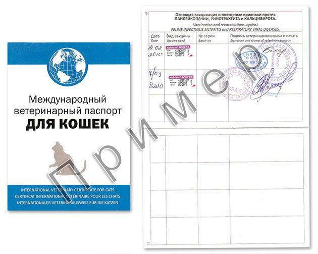 Основной документ, который должен быть у котенка - это международный ветеринарный паспорт