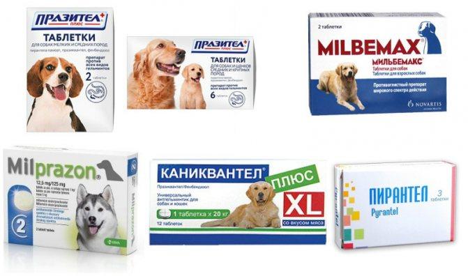Основные антигельминтные препараты для собак
