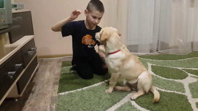 Основные принципы при дрессировке щенка – мягкость, последовательность, настойчивость