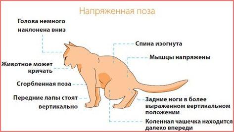 Основные симптомы болезни кошки