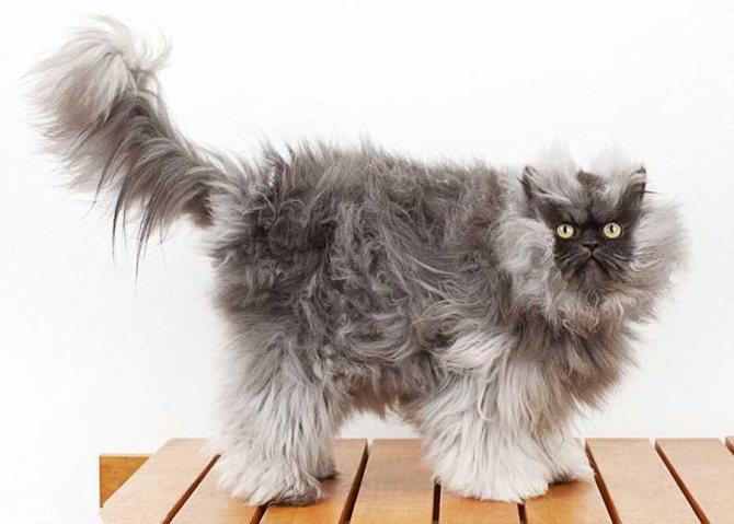 Особенность шерсти кошек