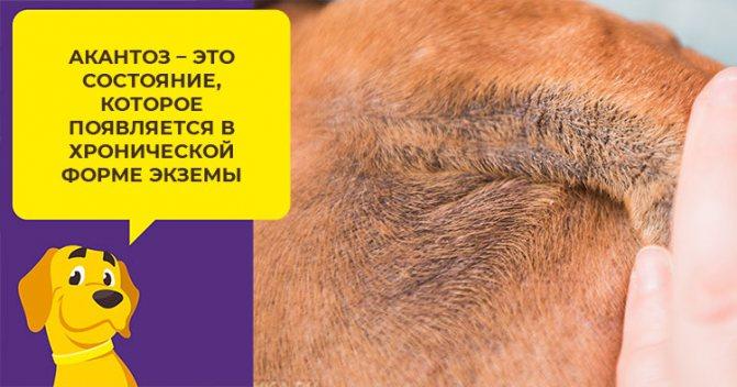 Особенности диагностики, лечения и профилактики экземы у собак