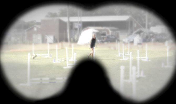 Острота зрения у собак