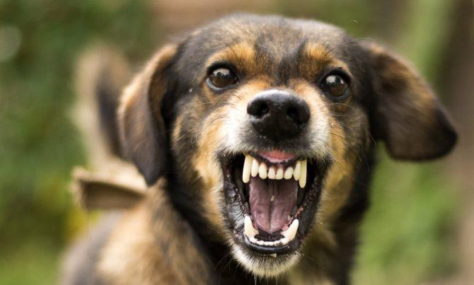 от каких болезней ставят прививку щенкам