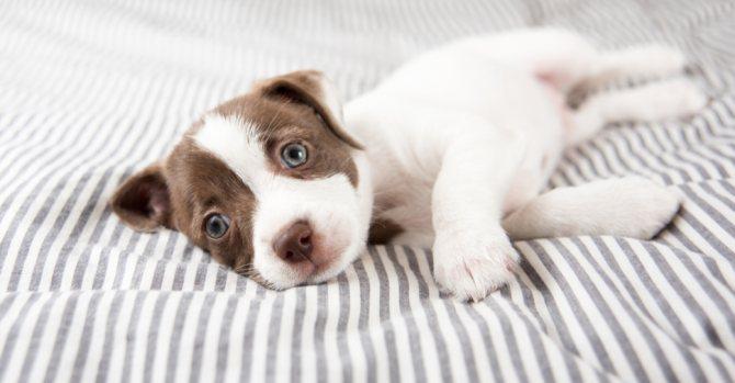 от каких болезней вакцинируют щенков