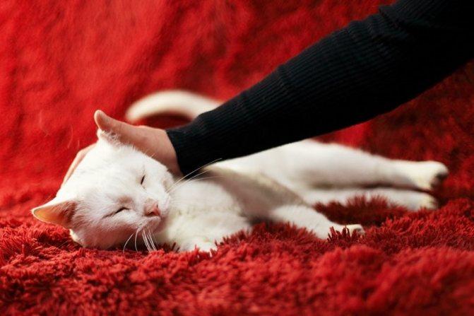 Отчаявшийся котик ласкался к каждому прохожему