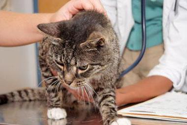 отек легких у кошек причины