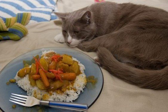 отказ кошки от пищи