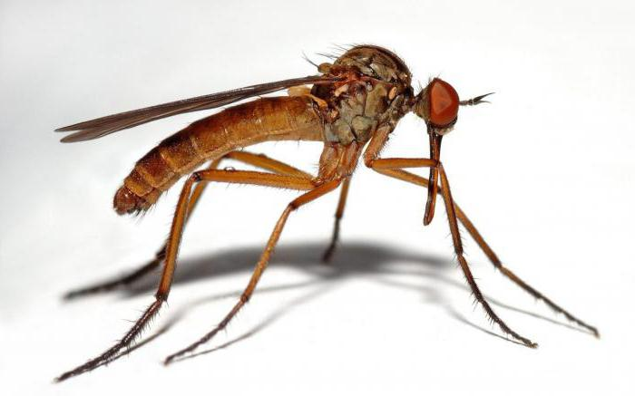 откуда берется комар